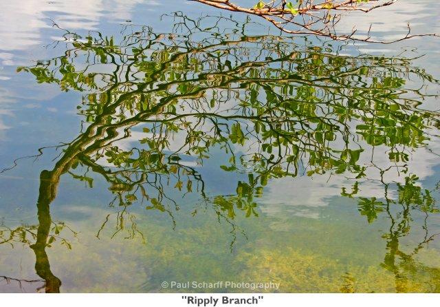 101 Ripply Branch.jpg