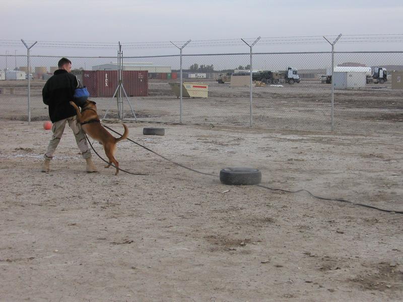 SSgt. Kerry Warren Training with MWD Boyke-1
