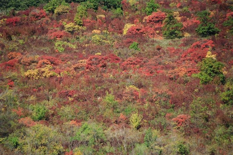 Az õsz csodás színei - The wonderful colours of autumn.jpg
