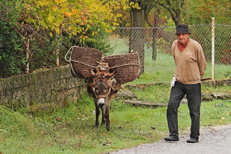 Donkey, best friend_MG_5395-11.jpg