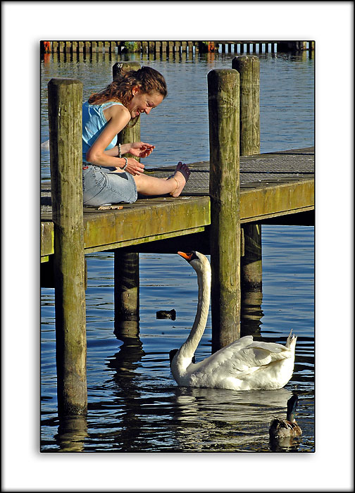 Feeding the swan, Ambleside, Cumbria