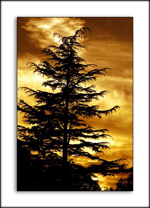 Fir tree and fire, Ambleside, Cumbria
