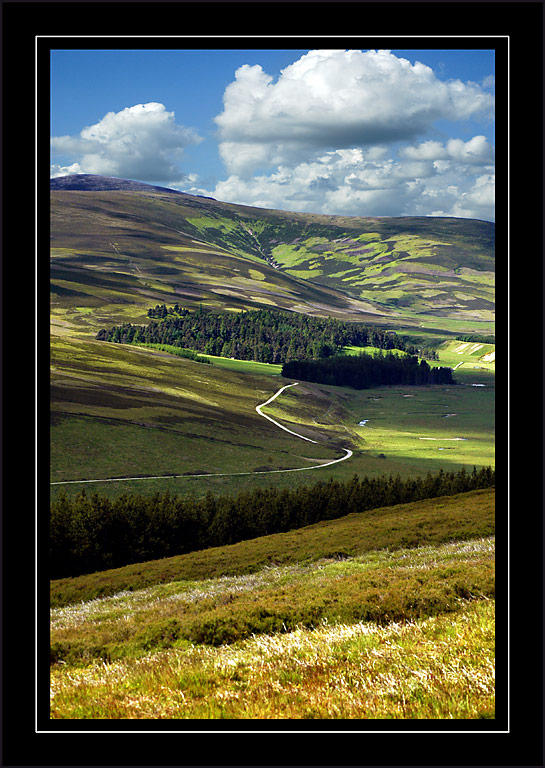 Forest road, Cairngorms, Scotland