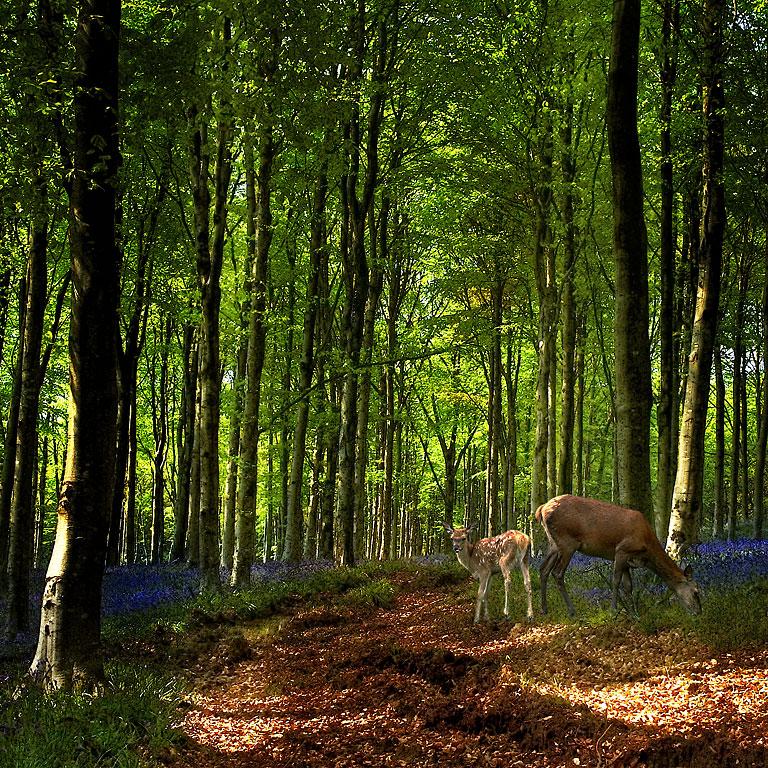 Bluebell fantasy! Hooke Park (2525)