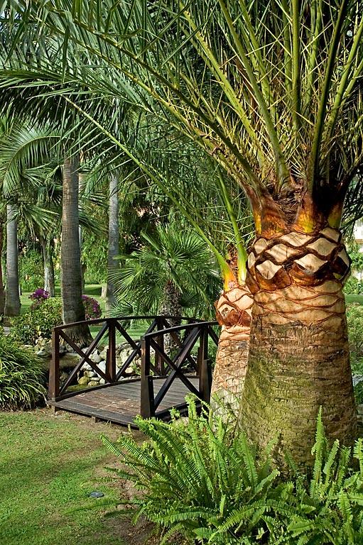 Palm trees and bridge, Don Carlos