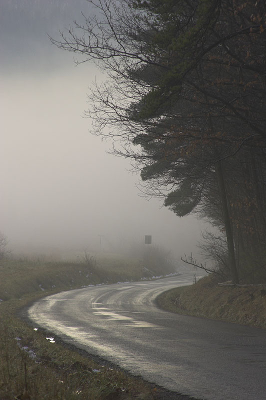 Foggy road home