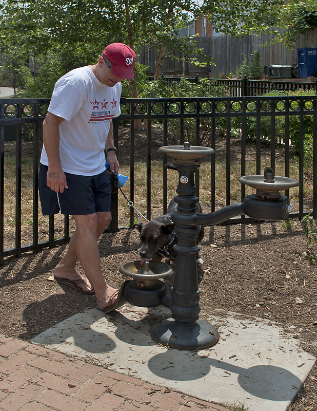 Doggie water fountain (only on Capitol Hill)