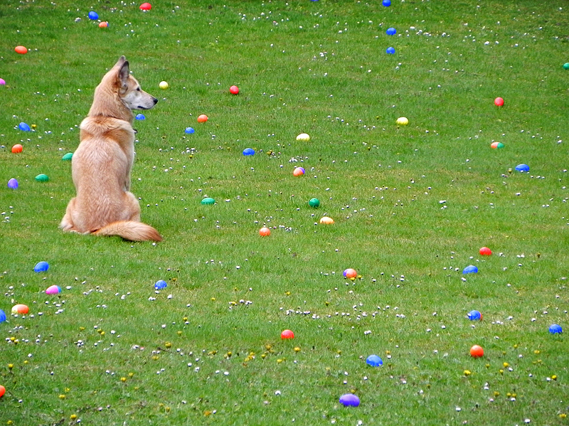 Guarding the Easter eggs