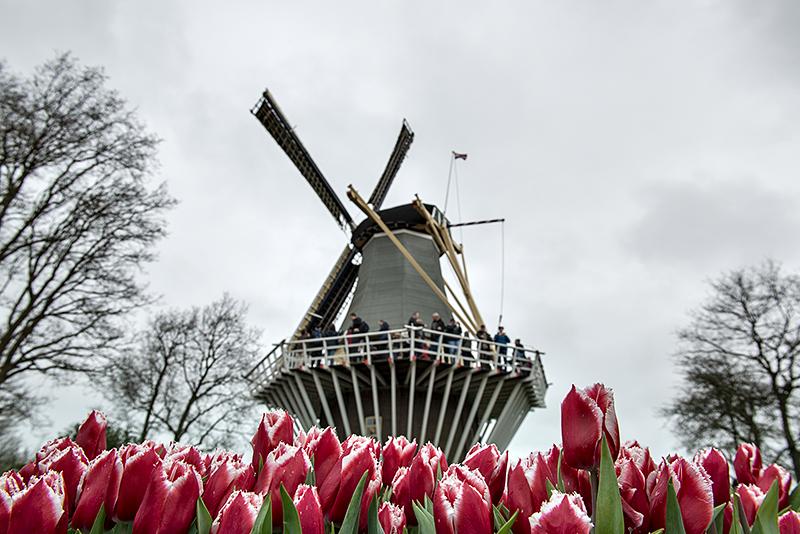 Keukenhof: Holland classic