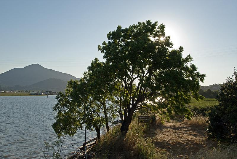 Tamalpais view