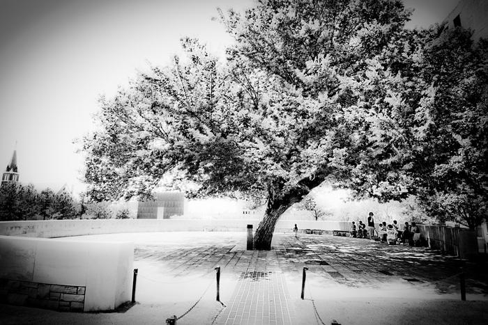 The Survivor Tree