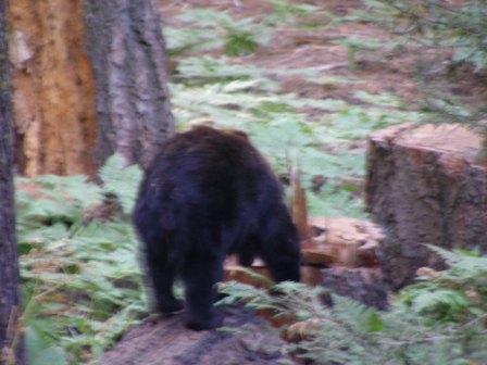 Bear08.jpg