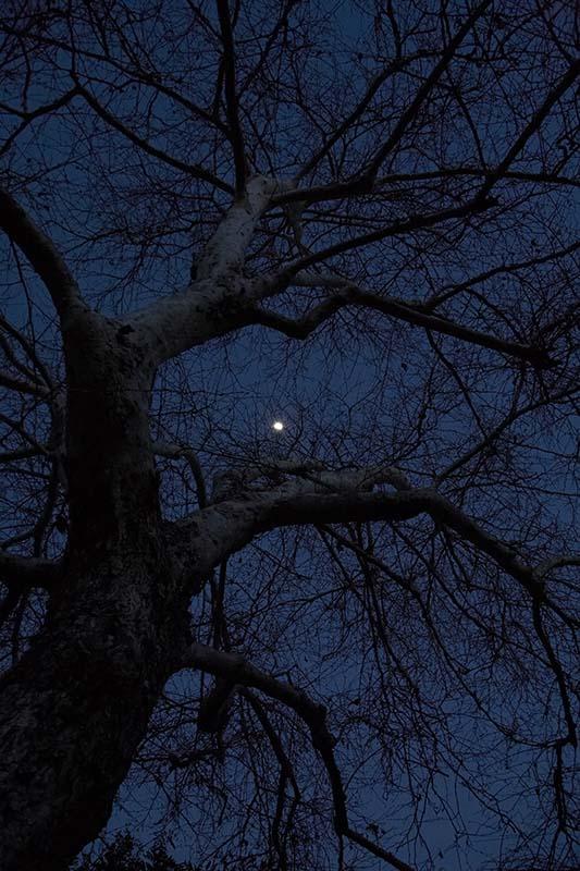 sycamore moon dance
