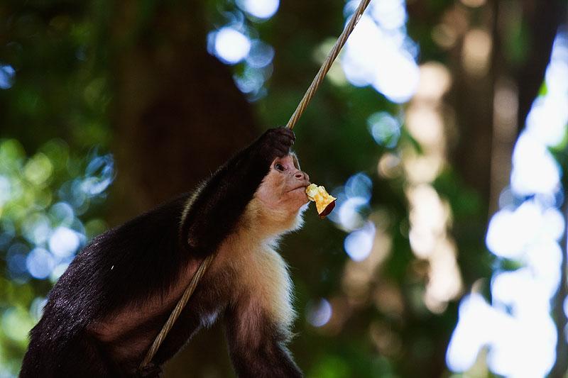 2010-3-24 - 2798 Monkey Apple - M.jpg
