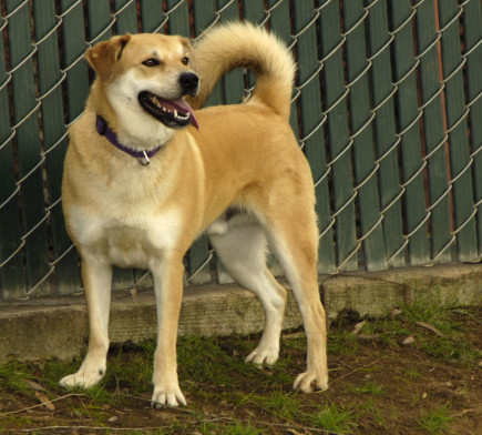Primo_3 ADOPTED!!