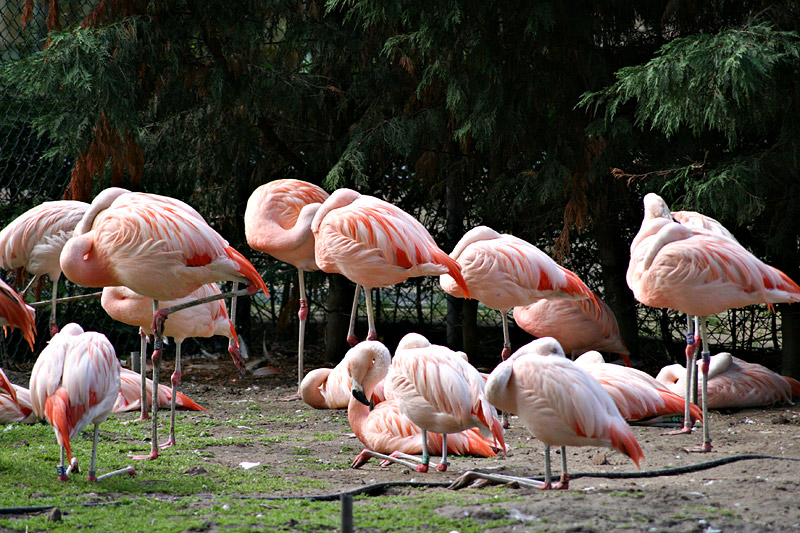 Avifauna Bird Park