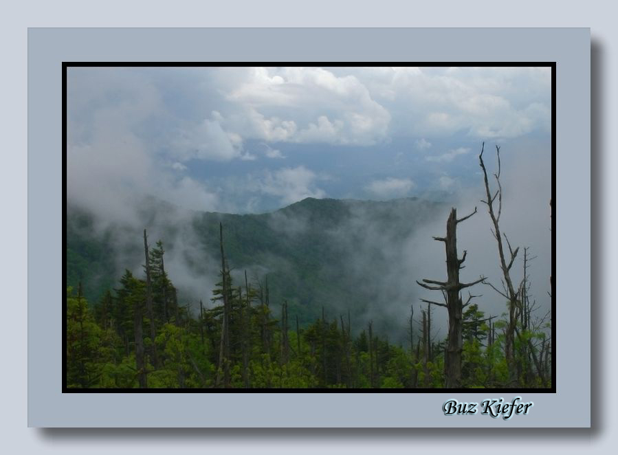 Clouds on Clingmans Dome