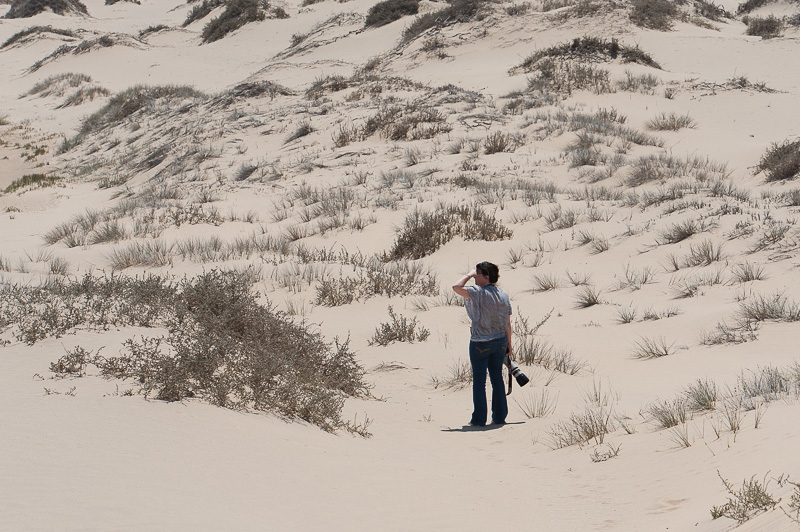 Looking for the dune lark