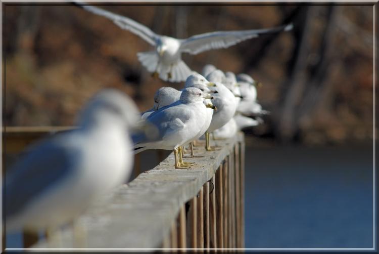 Seagull194.jpg