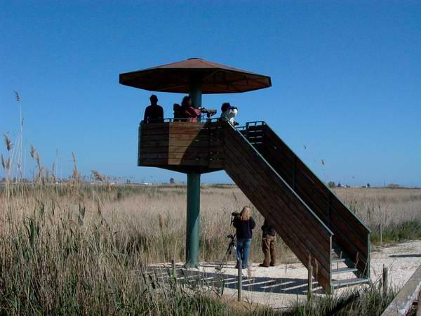 Birdwatching with Audouin Birding Tours in the Ebro Delta (Delta de lEbre) - Pont del Través