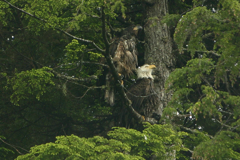 Mom and eaglet
