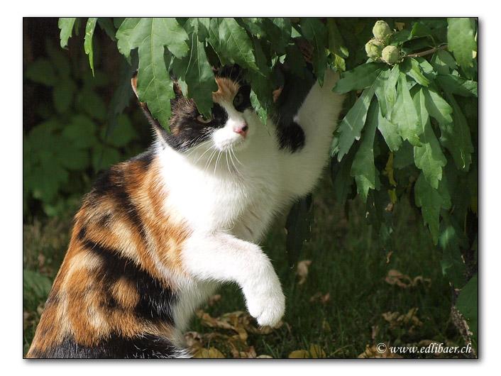 Katze / cat (8732)