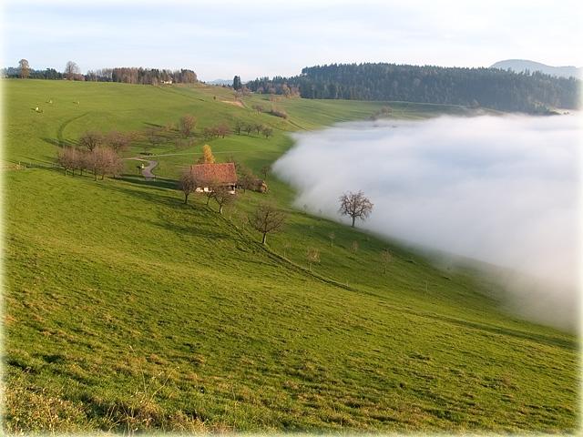 Gubel Menzingen (ZG) - Nebelgrenze /  fog boundary
