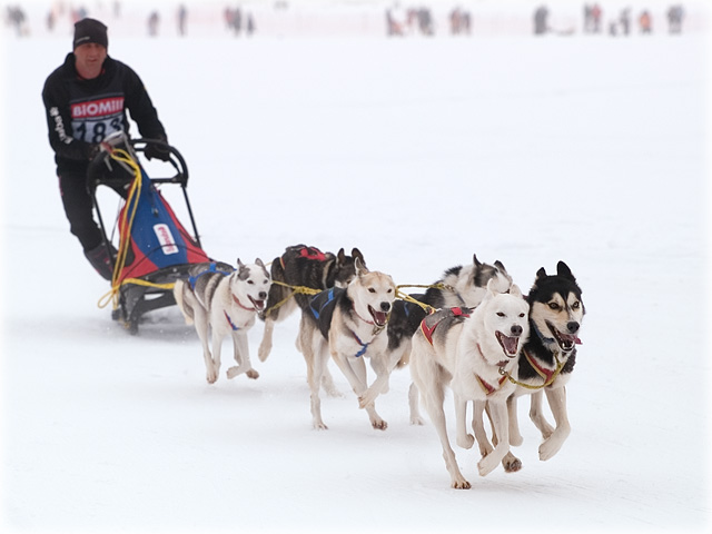 Dog sledding / Schlittenhunderennen