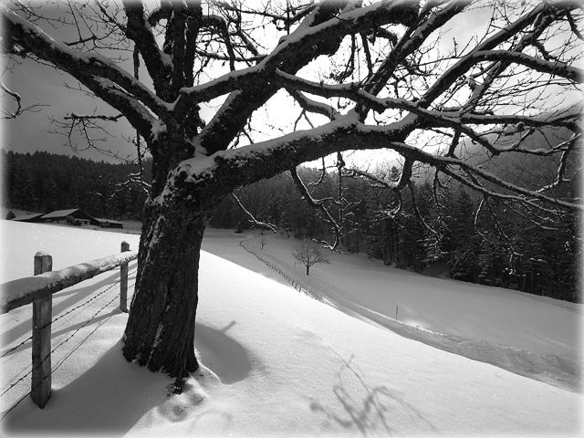 Winterday in Central Switzerland / Wintertag in der Zentralschweiz