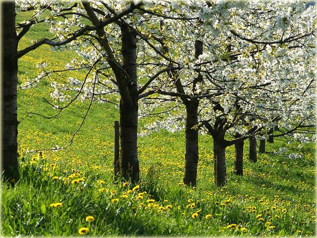 Frühling / Springtime