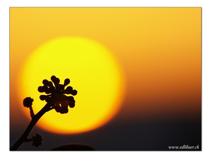 sun set / Sonnenuntergang