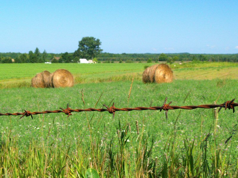 Michigans Countryside