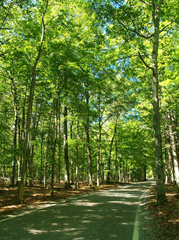 Michigans Route M-119 - Tunnel of Trees