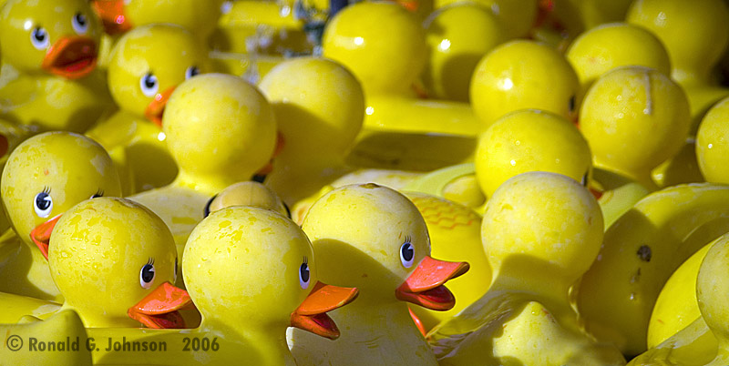 Rubber Duckie, youre the one....