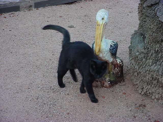 Lucky Pelican.....