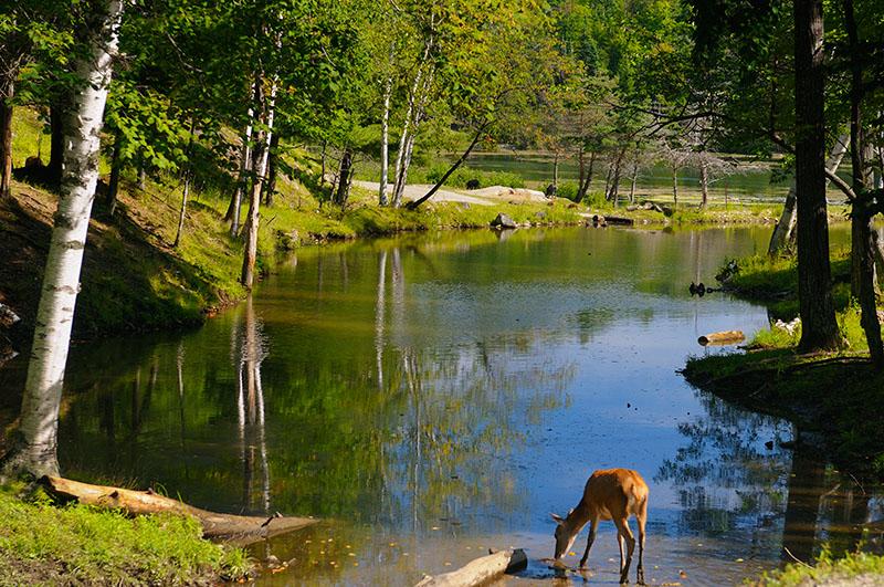 174 Deer Dip.jpg