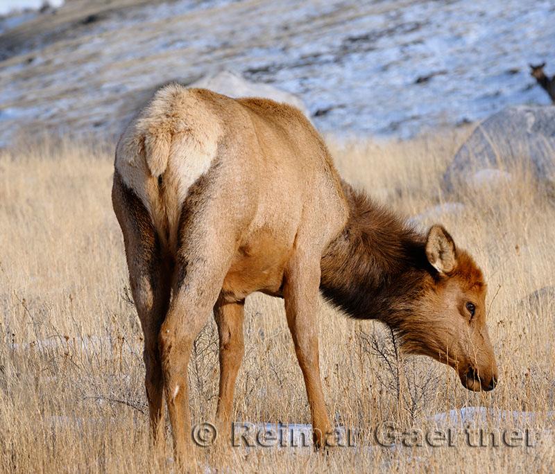 193 Elk 2.jpg
