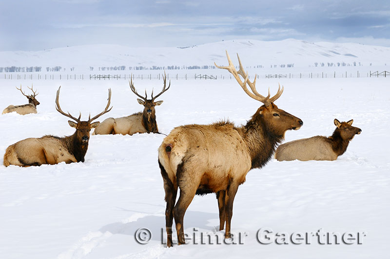 196 National Elk Refuge 3.jpg