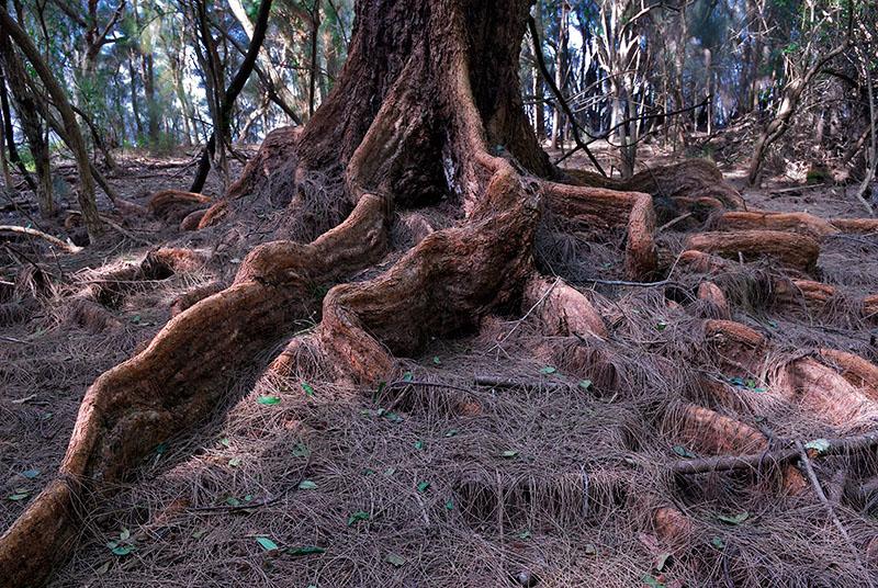 77 Banyan tree roots.jpg