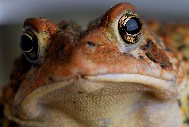 86 Toad 3.jpg