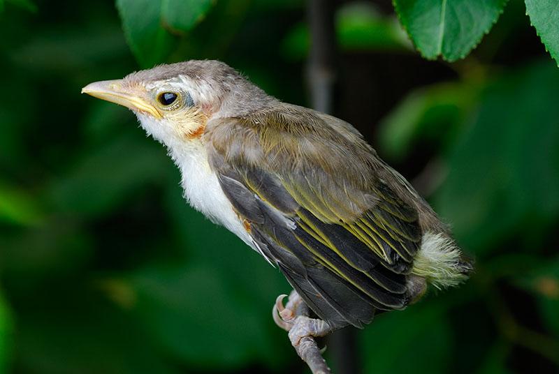 87 Baby Sparrow.jpg