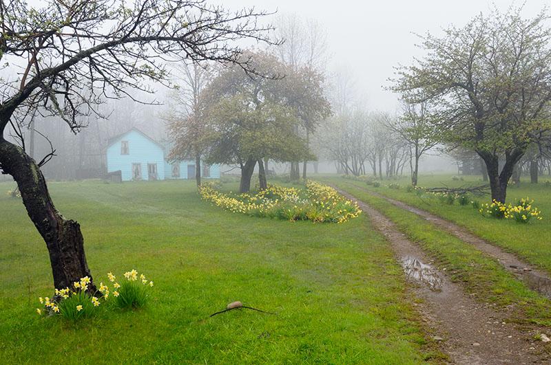 167 Country Spring fog.jpg