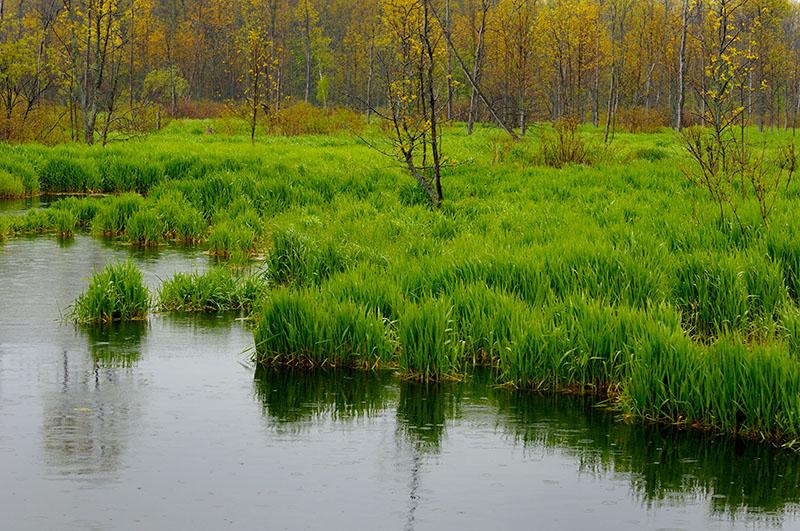 167 Spring marsh rain 1.jpg