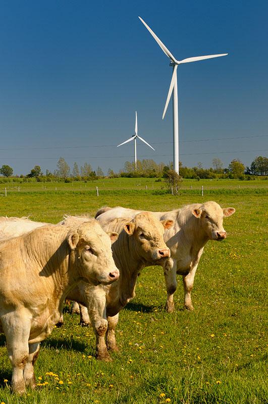 168 Bulls and Turbines 2.jpg