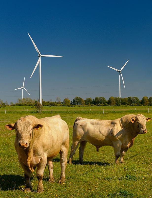 168 Bulls and Turbines 3.jpg