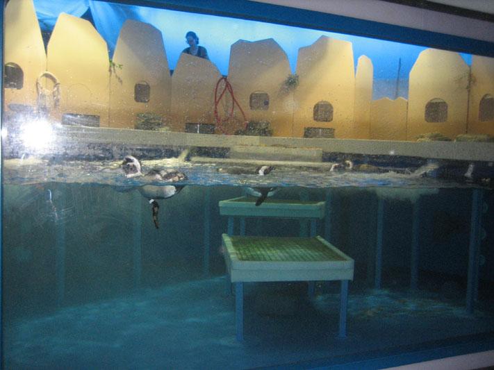 our favorite exhibit, the penguins!
