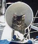 cat boat cat