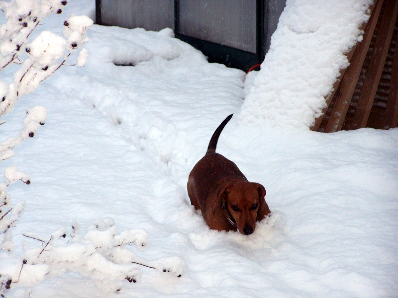 Man I hate snow that is higher than my belly!  Brrrrrr!