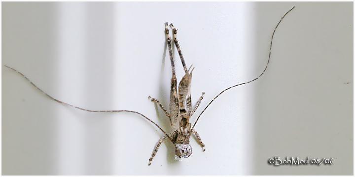 Cricket Exoskeleton