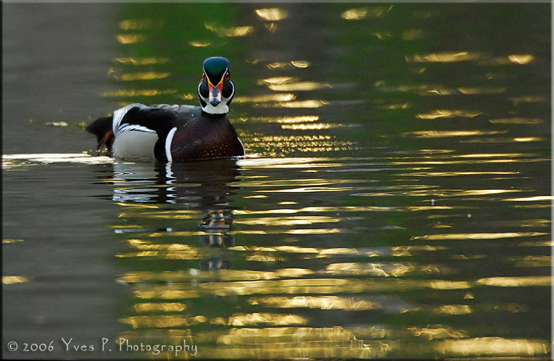 From the WoodDuck series ...